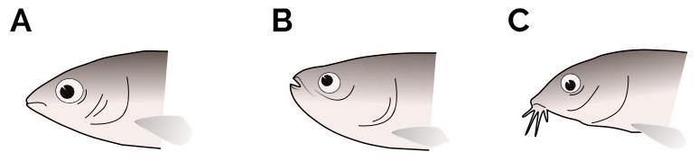 Posiciones de la boca en peces