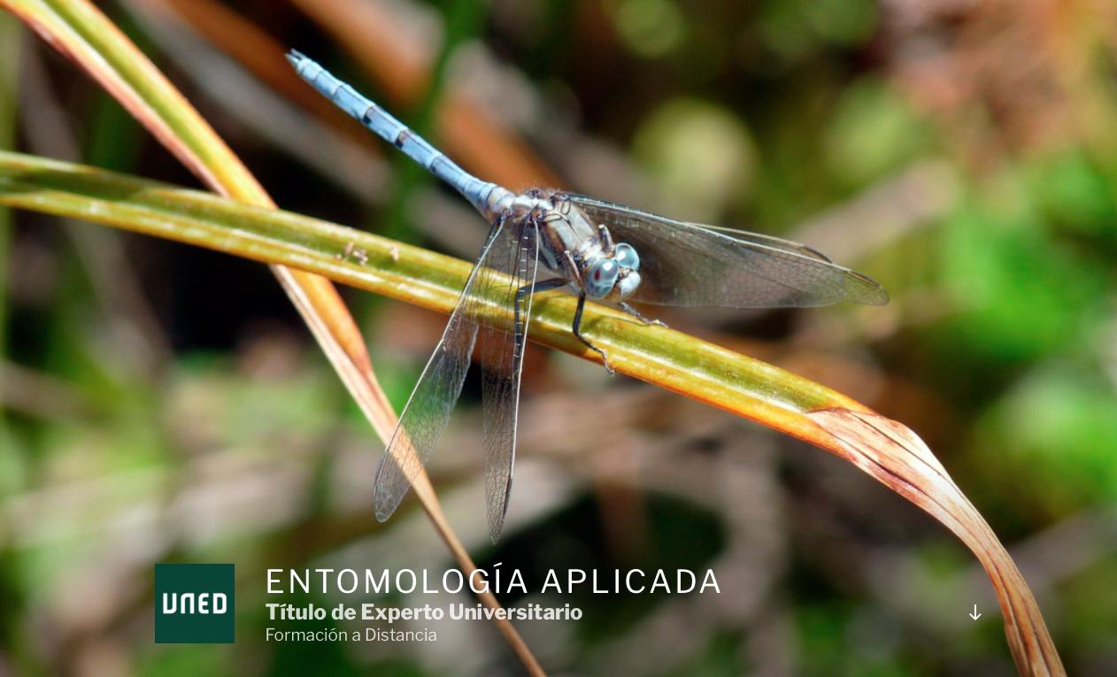 Curso de Experto Universitario en Entomología Aplicada