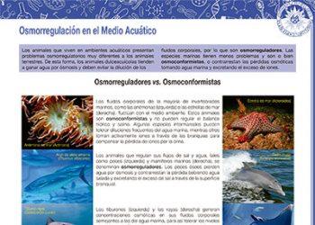 Osmorregulación en el medio acuático