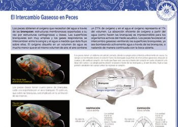 El intercambio gaseoso en peces