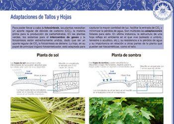 Adaptaciones de tallos y hojas