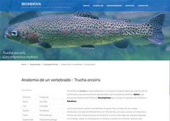 Anatomía de un vertebrado :: Trucha arcoíris